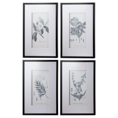 Set of 4 Black & White Botanical Prints | Wall Art