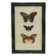 Butterfly Wall Art A | Wall Art