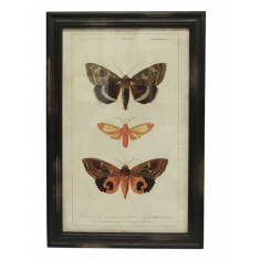 Butterfly Wall Art B  | Wall Art